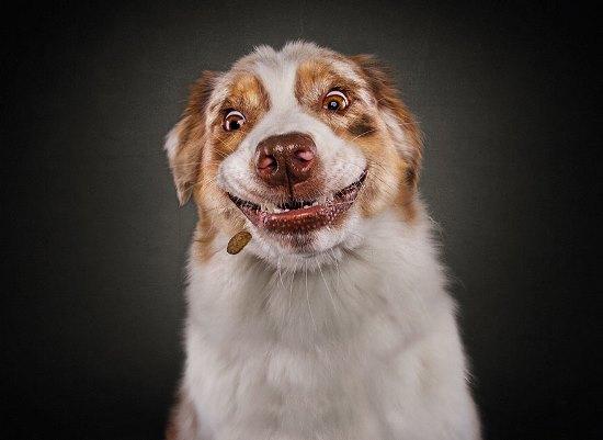 dogs-catching-treats-fotos-frei-schnauze-christian-vieler-72-57e8e98dac009__880