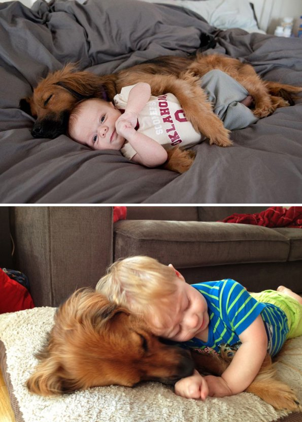 before-after-dogs-13
