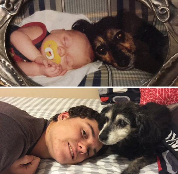 before-after-dogs-3