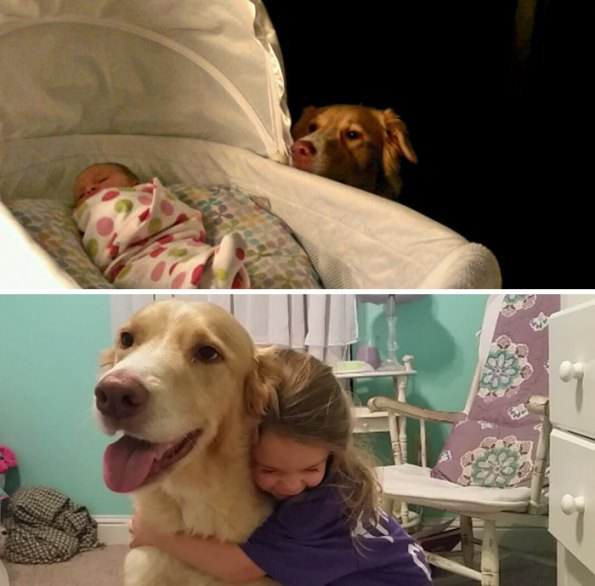 before-after-dogs-4
