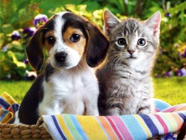 Кученце и котенце