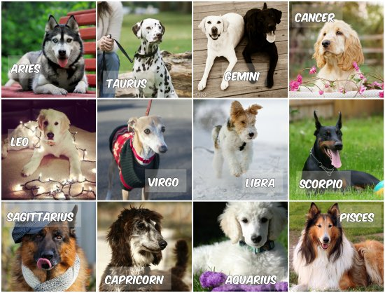 Подходящите кучета