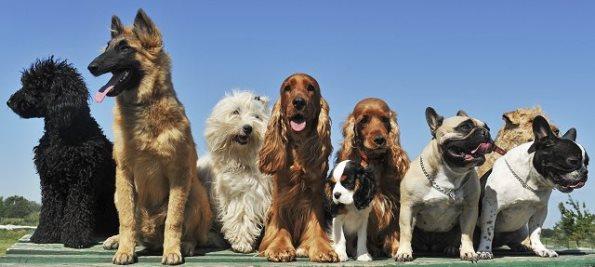 Породисти кучета