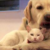 котка и куче