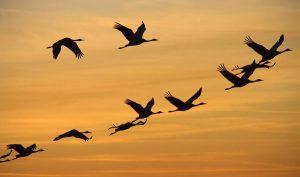 ptitsi