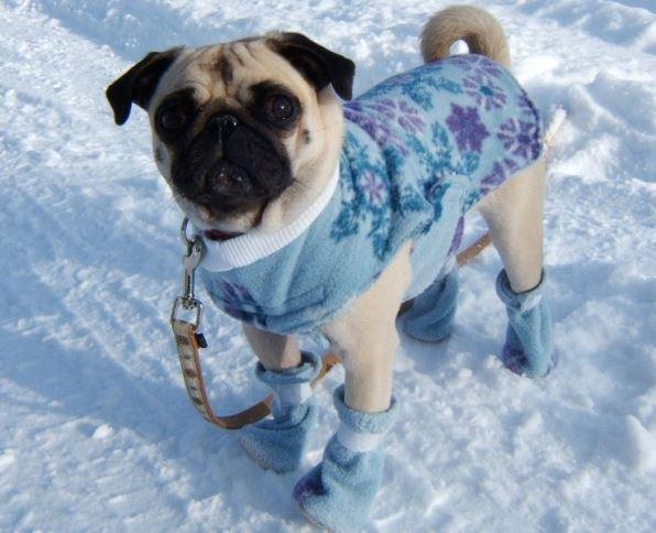 Кученце с палтенце през зимата