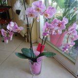 цвете орхидея