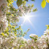 пролетта