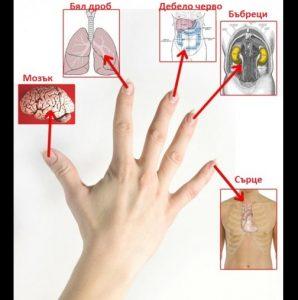 дланта